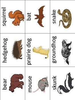 Hibernating Animals Vocabulary Cards - Great for ESL/ENL