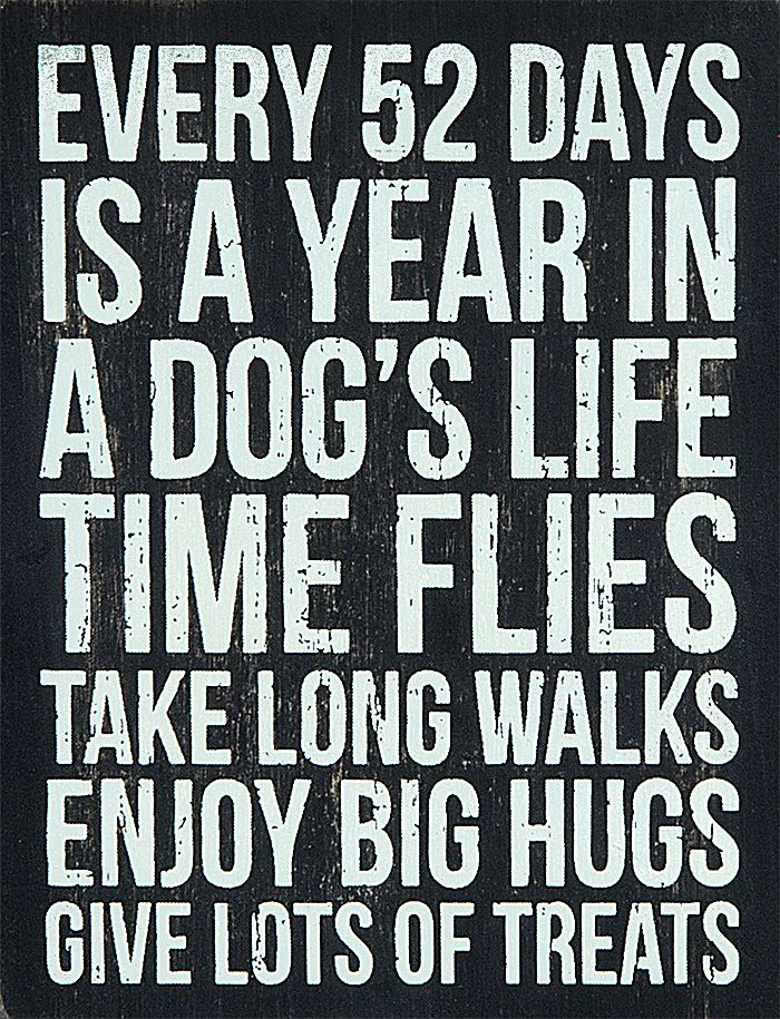give your dog the best life possible and they will enrich yours in ways you never could have imagined.