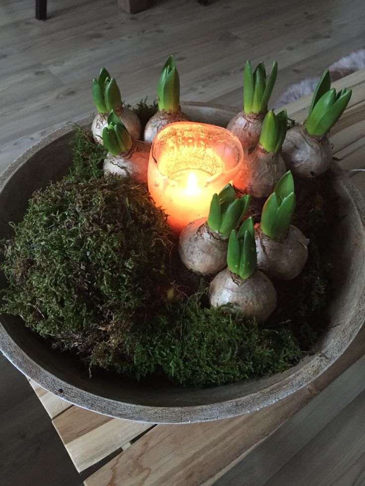 Hyacinten en mos