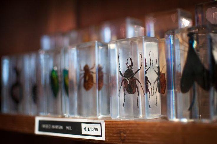 Insecten in kunsthars