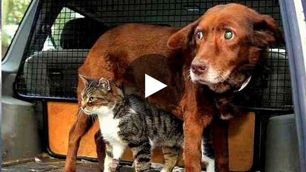 Une très belle histoire d'amitié entre un chat des rues et un chien aveugle et sourd