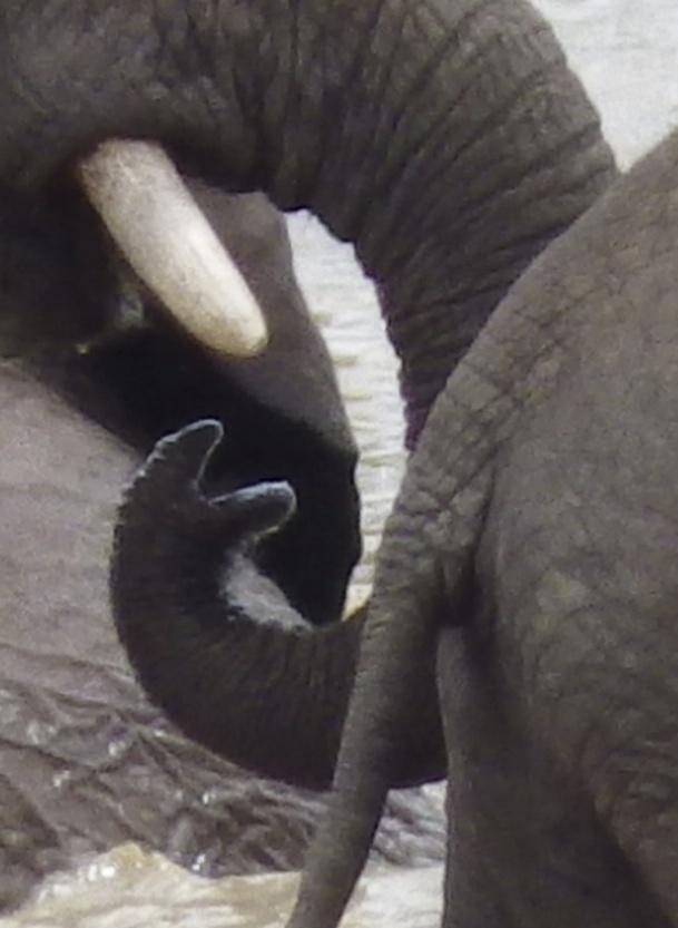 Elephants. Addo Elephant Park, South Africa. Photography by Wayne Visser. Copyright 2013.