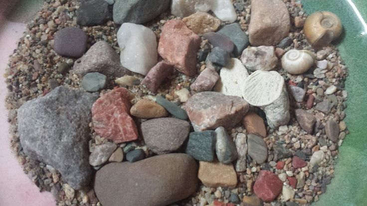 Rocks, fish fin fossil & shells from Beech Beach, St. Joe Island, Ontario