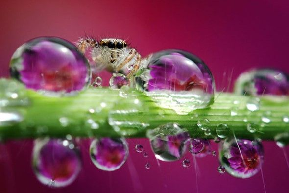 Discover the beauty of little wonders
