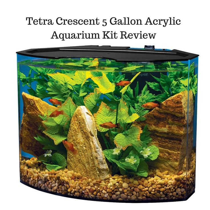 111 best betta fish tanks images on pinterest for Tetra fish tanks