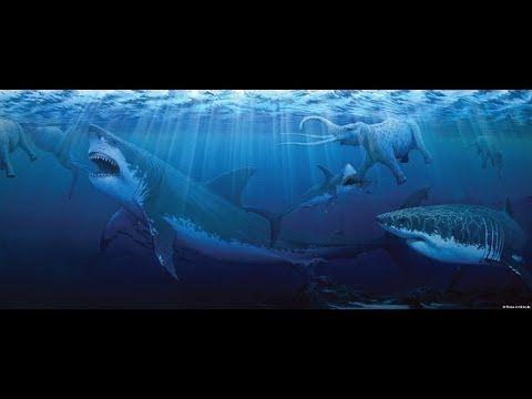 Megalodon Giant Sharkfull documentary HD