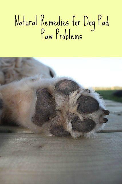 dog paw pad problems