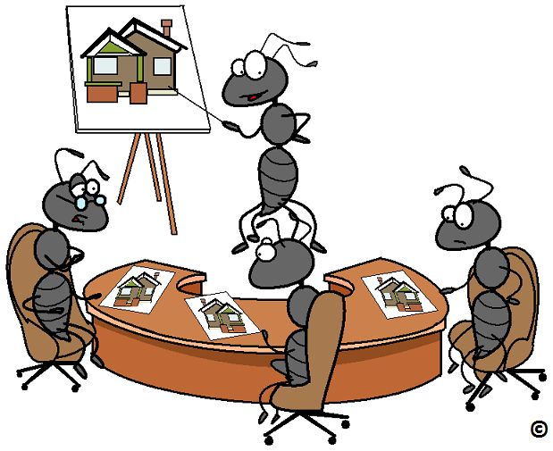 Up the ante when deciding by using a little ant wisdom.  Read how to ants overcome information overload.