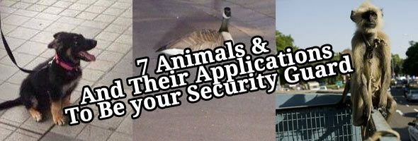 7 security animals you didn't think of that are actually trying to protect you! And their Applications to protect you! Which one will you hire? - http://www.tinnituzz.com/security-animals/