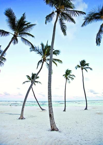 I love Palm Trees, I'll go anywhere they are, it can only be good.