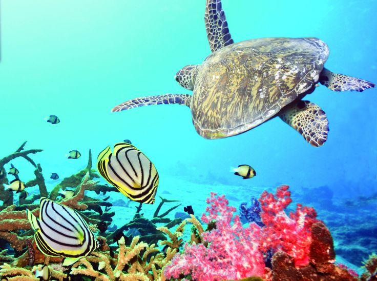 Le lagon de Mayotte avec ses 1500 Km² est un véritable vivier où se côtoient quasiment toutes les espèces marines tropicales #mayotte #mayottetourisme #gotomayotte