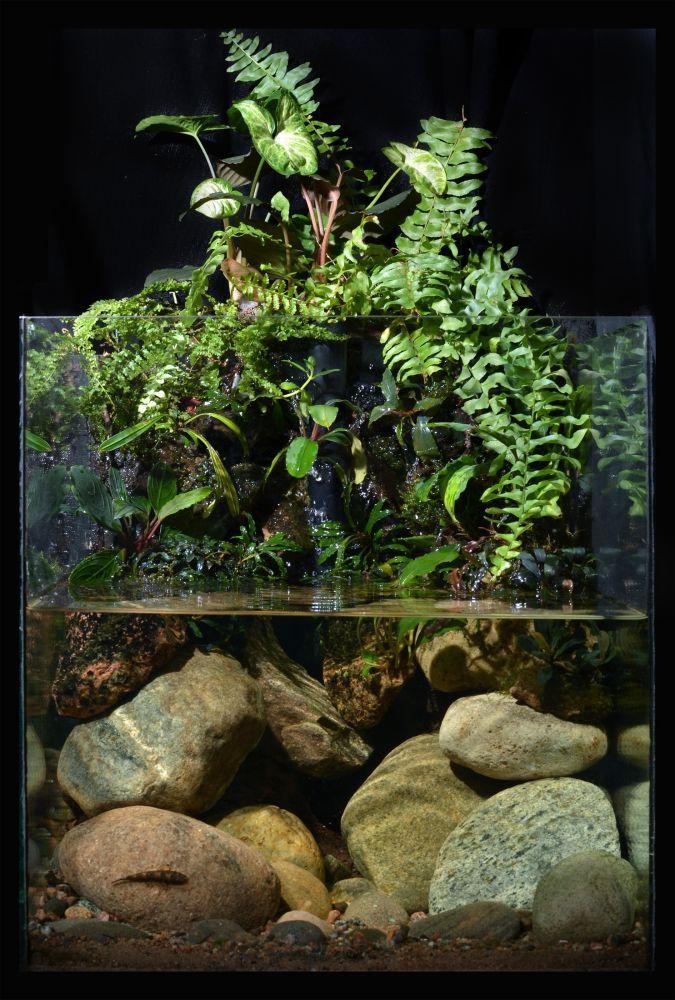 "Hemnes Ikea Vitrinenschrank ~ Über 1 000 Ideen zu ""Aquarium Design auf Pinterest  Aquarium"