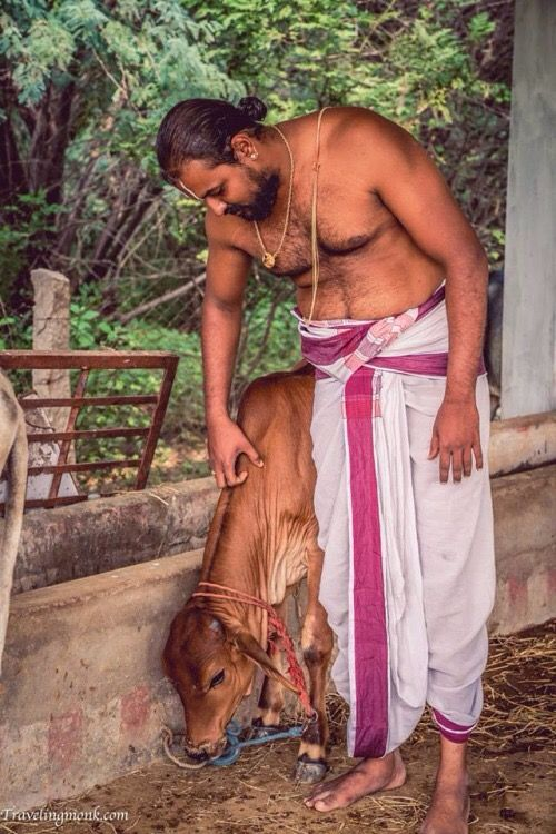 A Brahman and his calf.