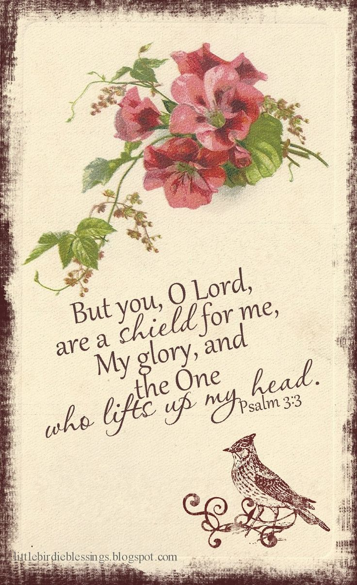 Little Birdie Blessings: Psalm 3:3 scripture graphic.  Free for personal use or sharing.