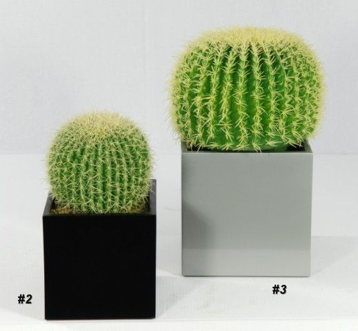 Congratulate, the Cactus voyeur pic thank for