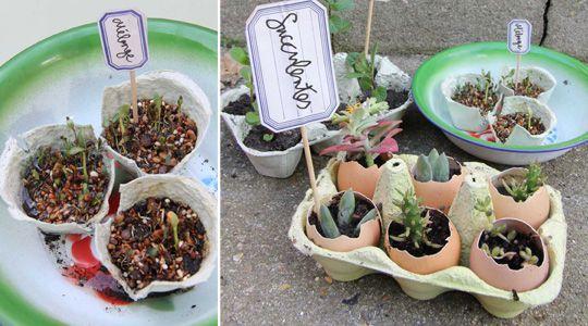 Une boîte à œufs est bien plus qu'une boîte à œufs : transformez-la en un charmant jardin pour y faire des semis ou y installer des boutures ou des petites plantes grasses.