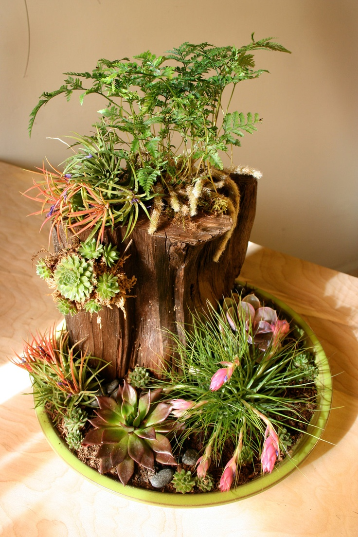 19 best Centerpiece Ideas images on Pinterest Dish garden