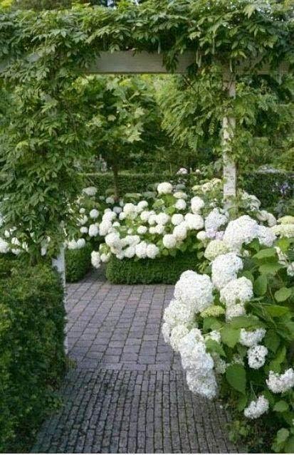 De hortensia's staan mooi in bloei en als de blauwe regen komt, is het een paradijs.