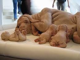 Image result for videa malé děti velcí psi