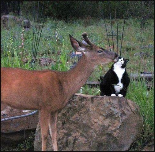 """Deer: """"Good Morning Kitty-Cat."""""""