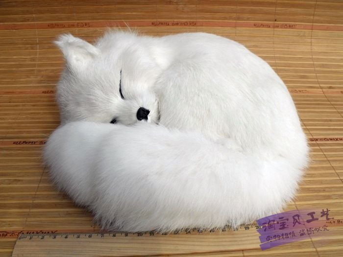 19 Best Foxes Images On Pinterest White Fox Foxes And