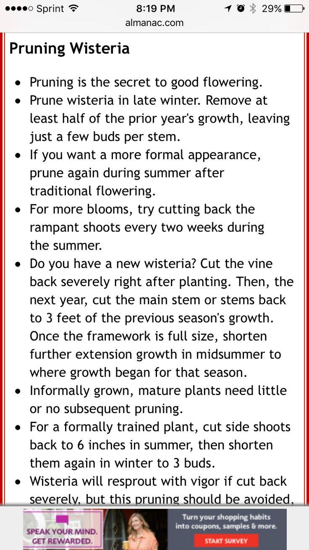 best 25 wisteria pruning ideas on pinterest prune ideas