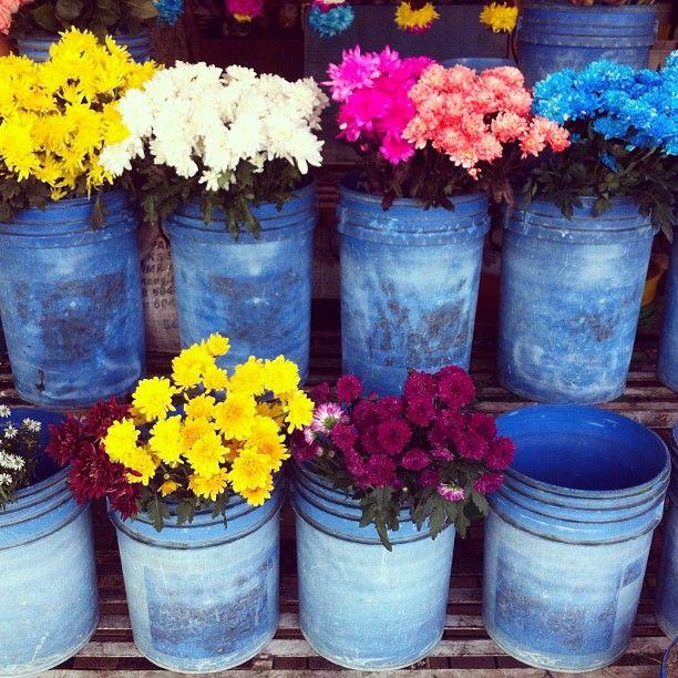 Penang flower market