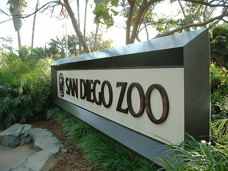 The San Diego Zoo - my most favorite zoo to date. It's not just Animals it also leads the Way in Biomimicry