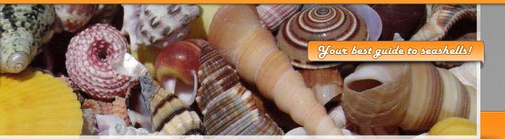 Guide to seashells, sealife, beachcombing, identifying seashells cleaning seashells and more