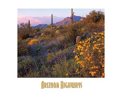 Arizona - Picacho Peak