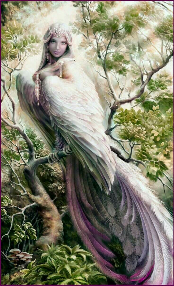 Beautiful bird/woman art