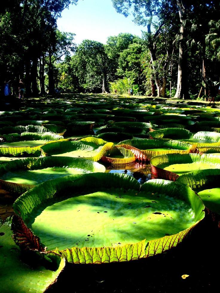 #Lotto #Mauritius #Mauricios #Island #nature #beauty