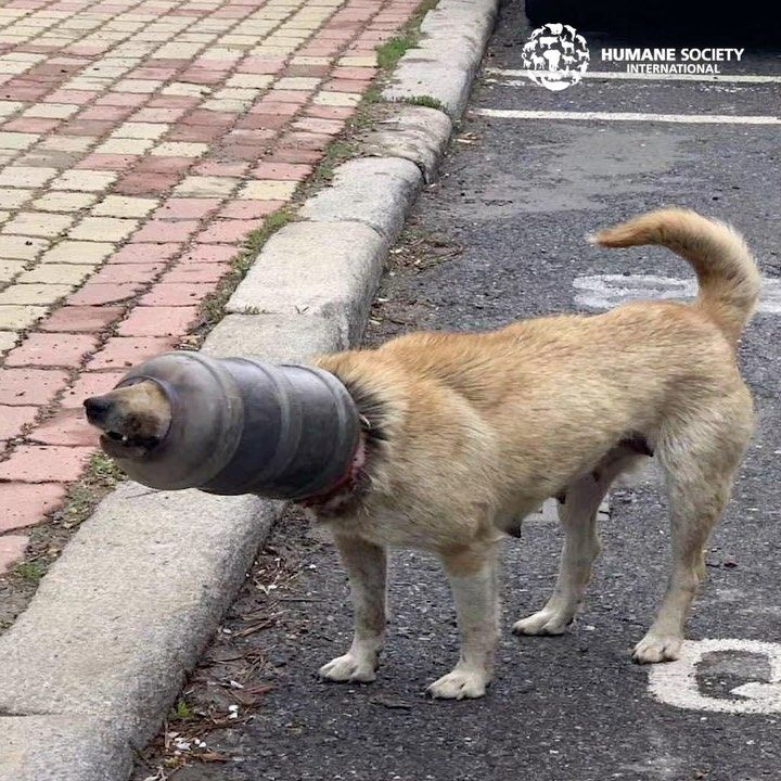 Humane Society International On Instagram Concerned Citizens In Dalian China Sounded The Alarm About A Poor Dog Who Had Been Su In 2020 Poor Dog Humane Society Dogs