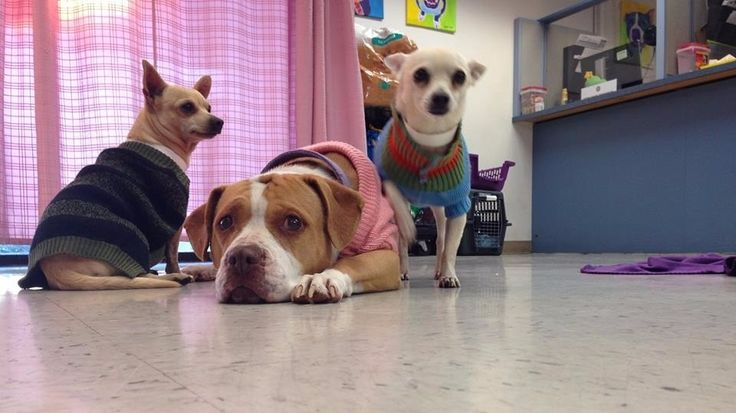 Blind dog, 2 helpers at Maricopa Co. Animal Care & Control find a home  PHOENIX - Three dogs at Maricopa County Animal Care & Control who were searching for a forever home found one Wednesday.