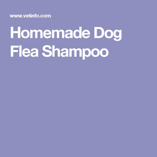 Homemade Dog Flea Shampoo