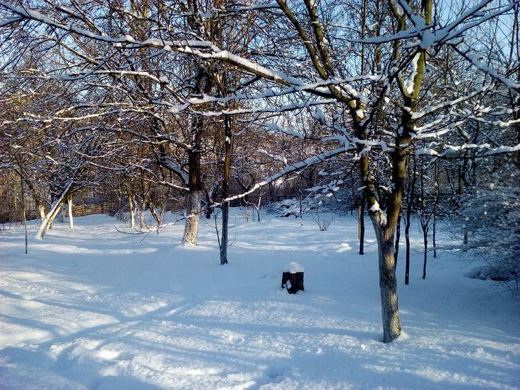 Zima w Polsce/Winter in Poland, Natura 15 274 (autor: jlez)