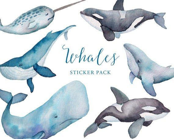 Whales Printable Sticker Pack Watercolor Whales Blue Whale Narwhal Orca Sea Life Stickers Watercolour Sea Animals Sticker Set In 2020 Watercolor Whale Watercolor Sea Animal Stickers