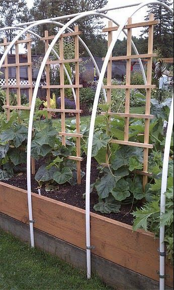 .raised vegetable beds