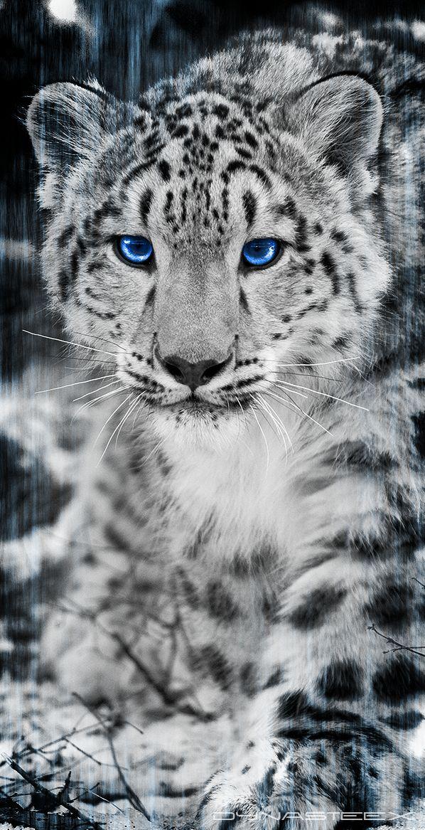 snow leopard artwork | Snow Leopard by DynasteeX on deviantART