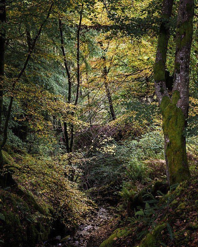 Inner Glow - Callander Scotland (OC) #arya #love #instagood #photooftheday #beautiful #happy #cute #picoftheday
