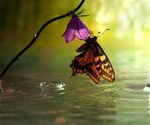 Aranyos pillangó etetés a virág háttérképek