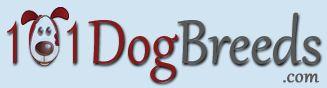 Kyi-Leo Dog (Lhasa Apso X Maltese Mix) Info, Temperament, Training, Puppies, Pictures