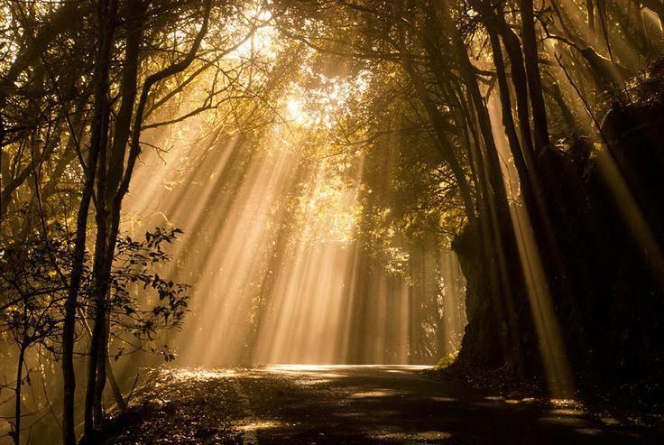 Photo Mystic Forest by Filip De Vos on 500px