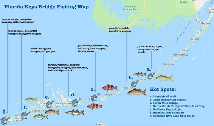 Best Florida Keys Bridge Fishing Spots All You Need To Know Fishingbooker Blog Islamorada Fishing Florida Keys Resorts Florida Keys Beaches