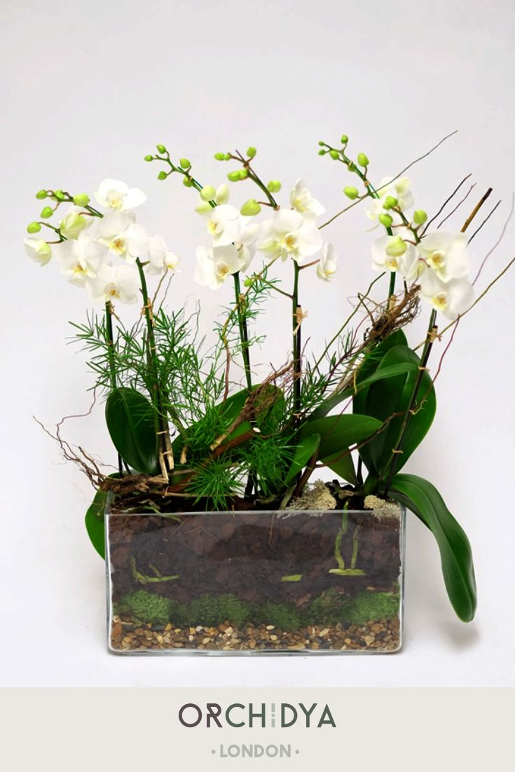 Petite Green Phalaenopsis Orchid Plants Are Arranged In A Rectangular Glass Vase With Natural Bamboo The Clea Orchid Plants Fresh Flowers Arrangements Orchids