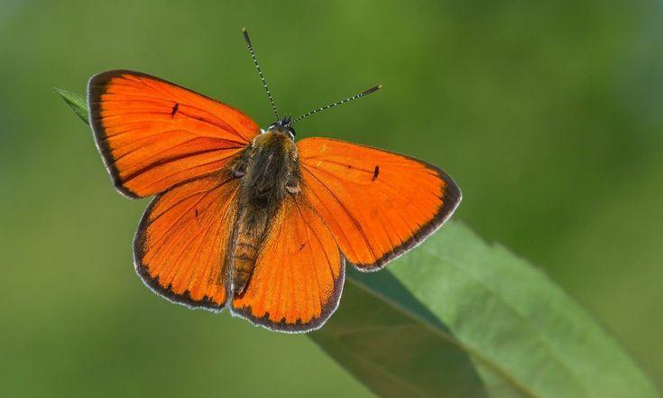 Pin Von Christine Potocar Auf Butterflies Moths