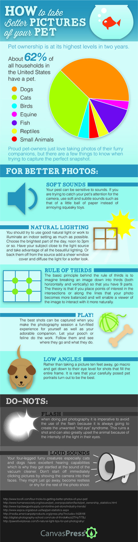 Pet photography infographic