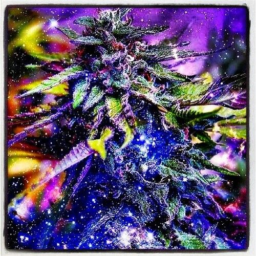 #pot #pothead #puff #ganja #green #followme #trippy #toke ...
