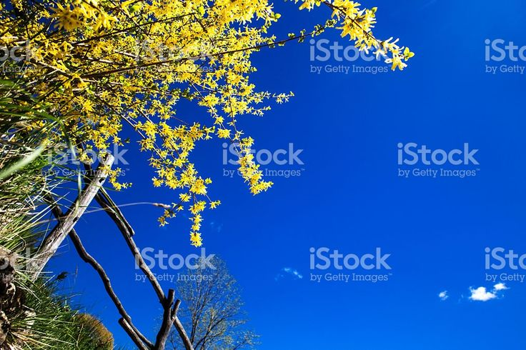spring day at country side foto stock royalty-free