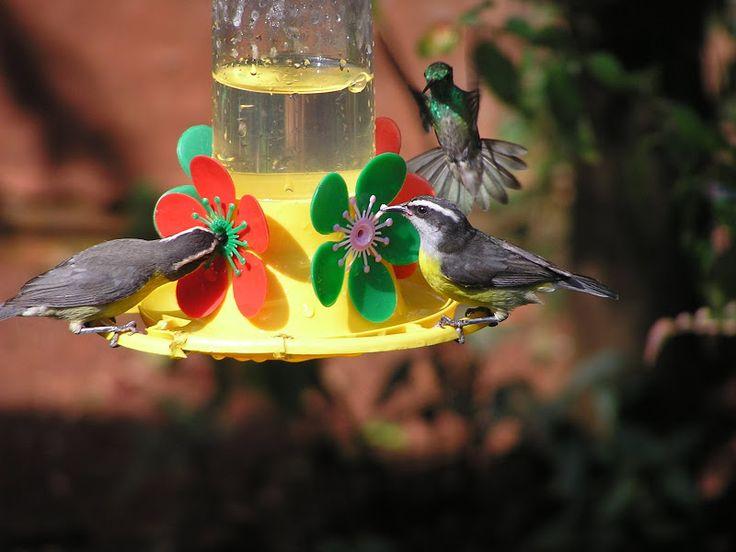 Puerto #Iguazú, #Argentine La maison des oiseaux-mouches. La casa de los #picaflores #Nature #Oiseaux #Birds #Chutes #Cataratas elisaorigami.blogspot.com